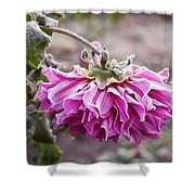 Close-up Of Flowers Covered By Frost Shower Curtain