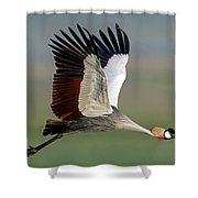 Close-up Of Grey Crowned Crane Shower Curtain