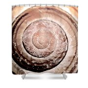 Close Up Of Sea Shell Shower Curtain by Tommytechno Sweden