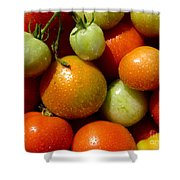 Closeup Of Ripening Fresh Tomatoes Shower Curtain