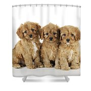 Cockapoo Puppy Dogs Shower Curtain