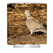 Collared Dove Shower Curtain