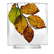 Colorful Leaves Isolated On A White Background Shower Curtain