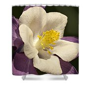 Columbine In The Morning Shower Curtain