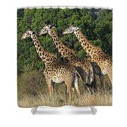 Common Giraffe Shower Curtain