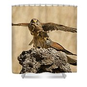 Common Kestrel Falco Tinnunculus Shower Curtain