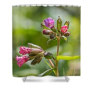Common Lungwort Shower Curtain