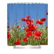 Common Poppy Flowers Shower Curtain