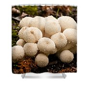 Common Puffball Mushrooms Lycoperdon Perlatum Shower Curtain