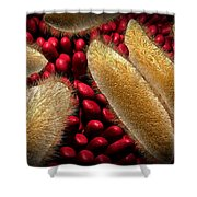 Conceptual Image Of Paramecium Shower Curtain