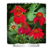 Coneflowers Echinacea Red  Shower Curtain
