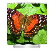 Coolie Butterfly Shower Curtain