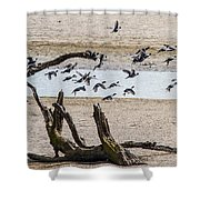 Coots-mud Hens Shower Curtain