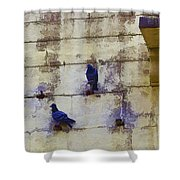 Couple Of Pigeons On A Wall Shower Curtain