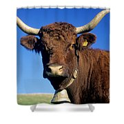 Cow Salers Shower Curtain