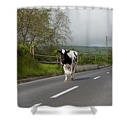 Cow Walks Along Country Road Shower Curtain