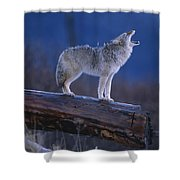 Coyote Standing On Log Alaska Wildlife Shower Curtain