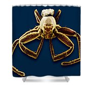 Crab Spider Shower Curtain