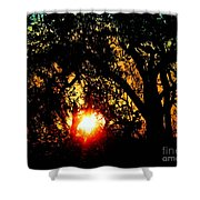 Creole Trail Sunset Shower Curtain