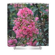 Crepe Myrtle Blossoms  Shower Curtain