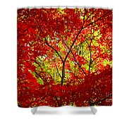 Crimson Window Shower Curtain