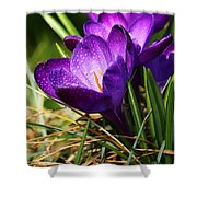 Crocus And Drops Shower Curtain