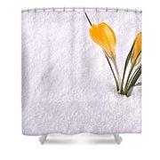 Crocus In Snow Yellow Shower Curtain