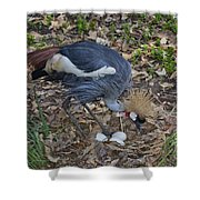 Crowned Crane And Eggs Shower Curtain