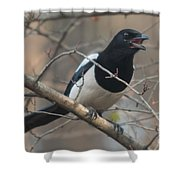 Crying Magpie Shower Curtain