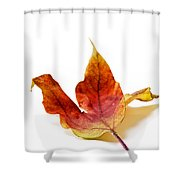 Curled Autumn Leaf Isolated On White Shower Curtain