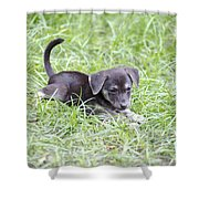 Cute Puppy In The Grass Shower Curtain by Jannis Werner