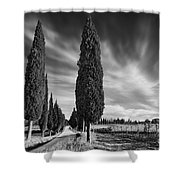 Cypress Trees- Tuscany Shower Curtain