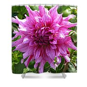 Dahlia Named Annette C Shower Curtain