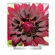 Dahlia Named Black Wizard Shower Curtain