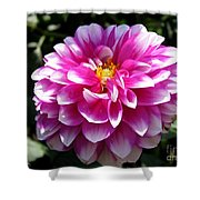 Dahlia Named Brian Ray Shower Curtain