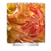 Dahlia Named Misty Explosion Shower Curtain