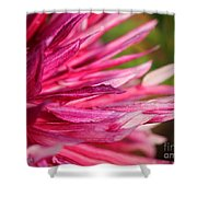 Dahlia Named Normandy Wild Willie Shower Curtain