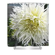 Dahlia Named Tsuki Yori No Shisa Shower Curtain