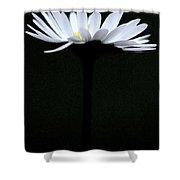 Daisy 3 Shower Curtain