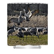 Dance Of The Cranes Shower Curtain