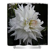 Darling Dahlia Shower Curtain