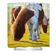 Dartmoor Ponies Painting Shower Curtain