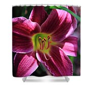 Day Lily 2 Shower Curtain