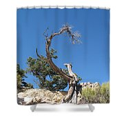 Dead Tree At Grand Canyon Shower Curtain