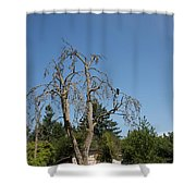Dead Tree With Crow Shower Curtain