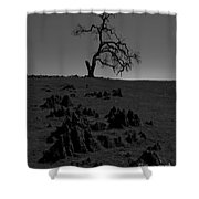 Death Of An Oak Tree Shower Curtain