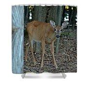 Deer 1 Shower Curtain