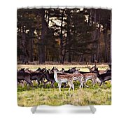 Deer In The Phoenix Park - Dublin Shower Curtain by Barry O Carroll