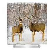 Deer In The Snowy Woods Shower Curtain