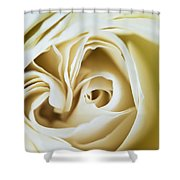 Detail Of Rose Flower Marrakech, Morocco Shower Curtain